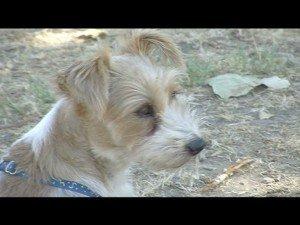 Bocconi per cani sospetti: potrebbero essere avvelenati