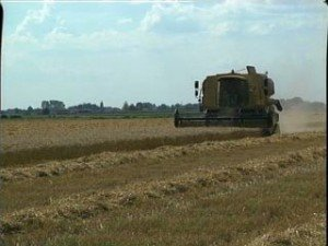 Agricoltura, le conseguenze della siccità