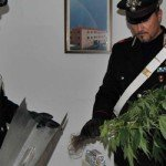 Ostellato: coltivava marijuana in cantina, arrestato