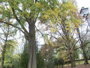 Nuovi abbattimenti di alberi con patologie o problemi di stabilità