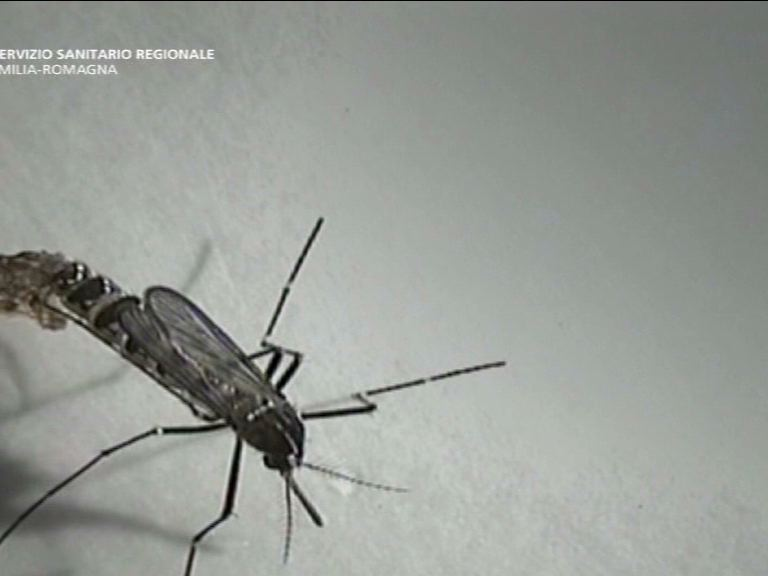 zanzar