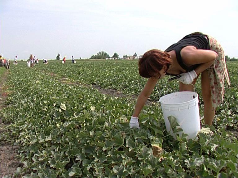 agri agricoltura coldiretti