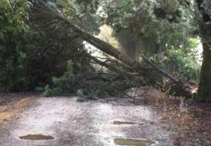 maltempo alberi albero strada danni