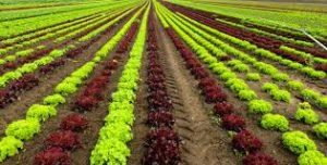 bio agri