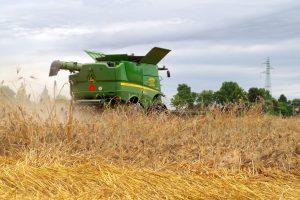 agricoltura grano coldiretti TREBBIATURA CAPPELLI PINTON 2