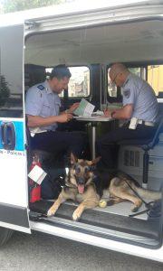 cane polizia municipale