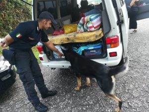 carabinieri cinofili cani droga