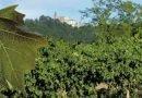 """""""Di-Vino Primaro"""": escursione in bicicletta con visita vigneti e degustazione vini sabato 22maggio"""