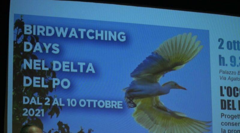 birdwatching delta po